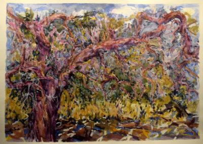 32-olivo en Botarell 50 x 70 cms